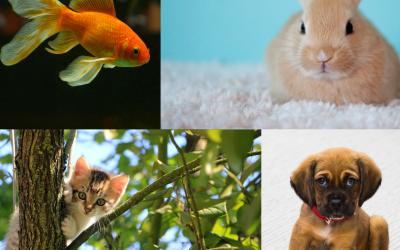 Kitten, hond, vis of konijn in huis? Zo hou je het opgeruimd en schoon!